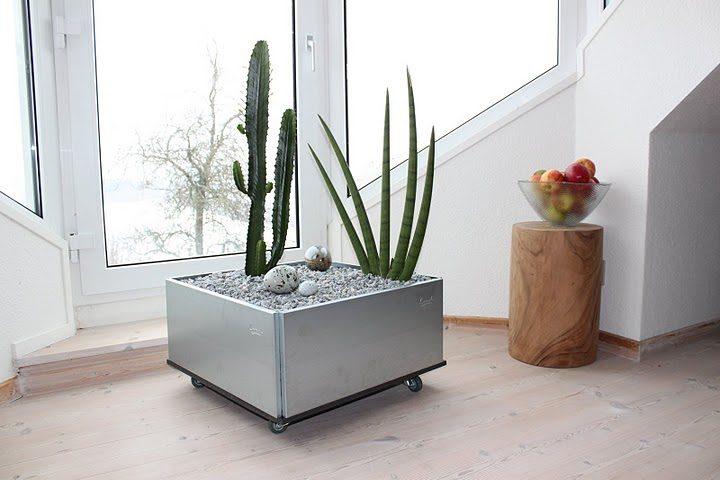 kaktus i Mobile plantekasse