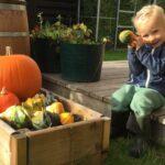 Hage i september - 10 høst aktiviteter i hagen