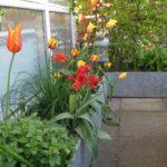Plant Kummer i vinterklær