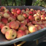 10 fine høstsaktiviteter i hagen